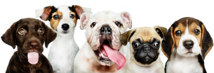 A1 Pooper Scooper Service Main page image showing 5 dogs of different breeds all looking straight at the camera