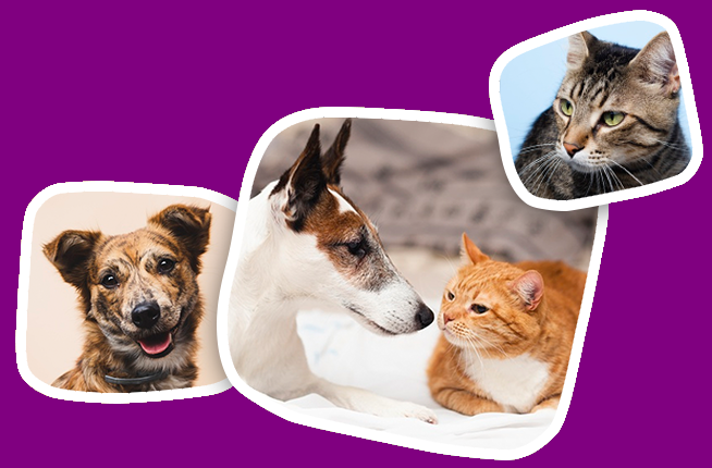 A1 Pooper Scooper Service main page image showing 2 dogs and 2 cats